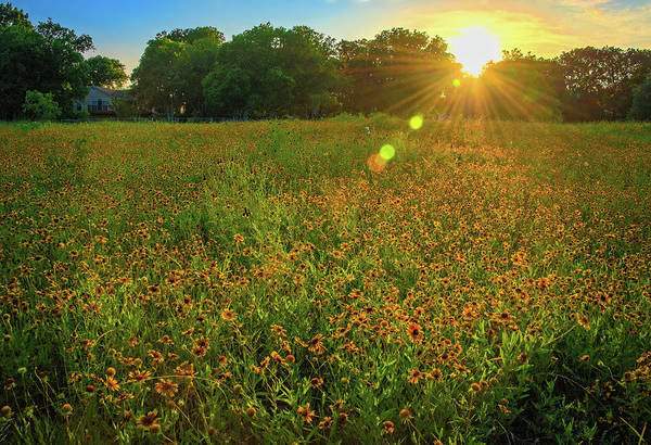 Photograph - Indian Blanket Sunset In The Hill Country by Lynn Bauer
