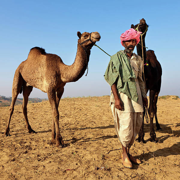 Indian Culture Photograph - Indian Man With Camels During Festival by Hadynyah