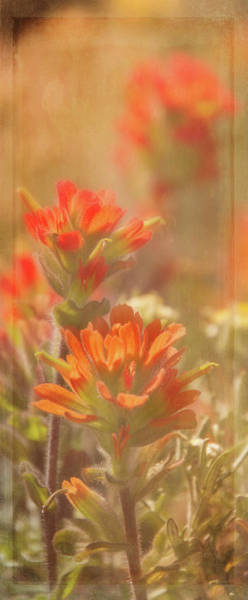Wall Art - Digital Art - Indian Paintbrush 2 by Terry Davis