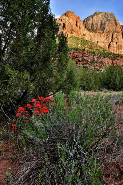 Photograph - Indian Paintbrush In Zion Np by Ray Mathis