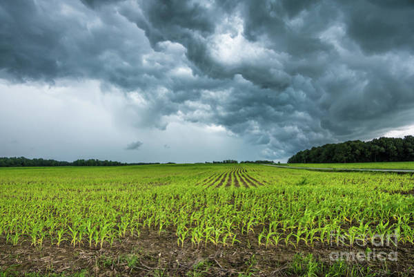Photograph - Indiana Cornfield Summer Thunderstorm by Gary Whitton