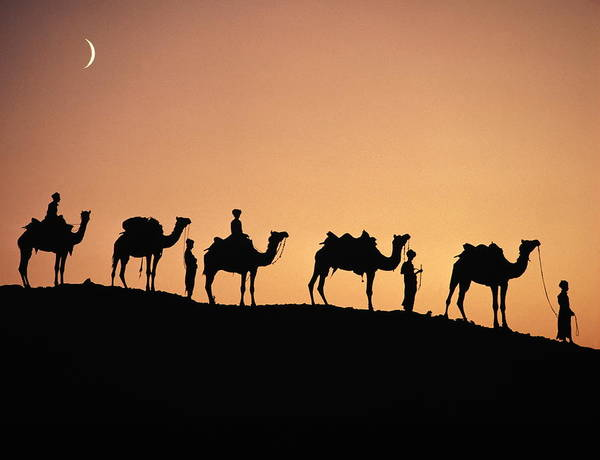 Dromedary Wall Art - Photograph - India,rajasthan,camel Caravan by Robert Frerck