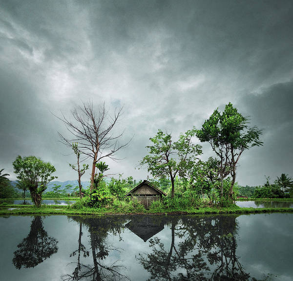 Wall Art - Photograph - Indonesia, Bali, Shack In Rice Paddy by Ed Freeman