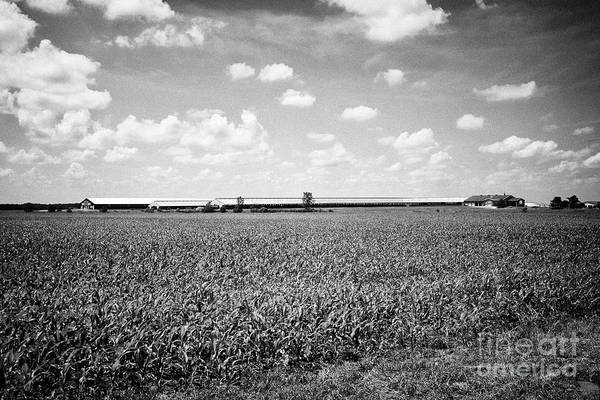 Wall Art - Photograph - industrial dairy farm in amongst crops planted in indiana USA by Joe Fox
