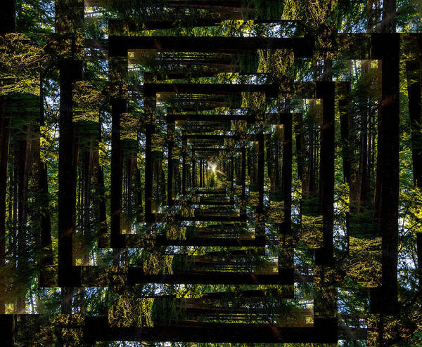 Wall Art - Photograph - Infinity Tunnel Forest Sunburst by Pelo Blanco Photo