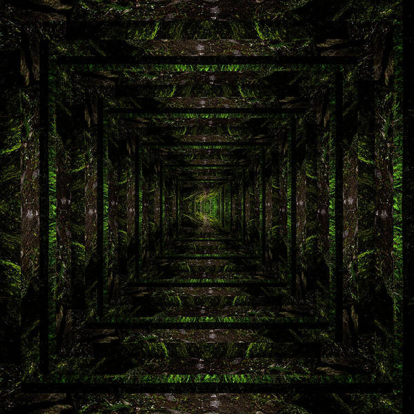 Wall Art - Photograph - Infinity Tunnel Wooded Trail Reflection by Pelo Blanco Photo