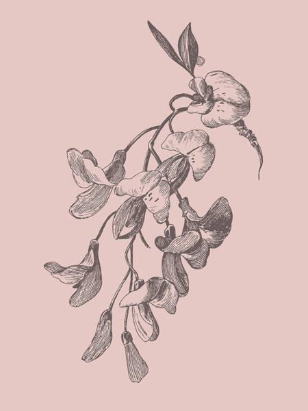 Love Mixed Media - Inflorescence Blush Pink Flower by Naxart Studio