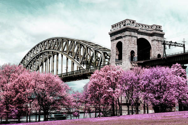 Photograph - Infrared Pink by Cate Franklyn