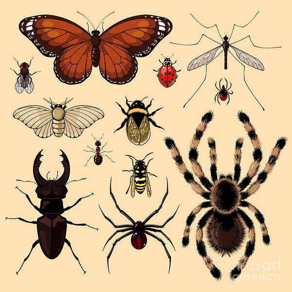 Wall Art - Digital Art - Insects by Alena Kozlova
