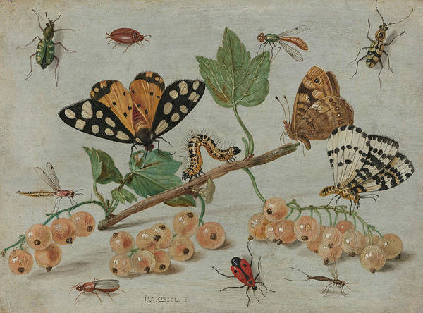 Painting - Insects And Fruits by Jan van Kessel the Elder