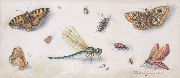Painting - Insects, Butterflies, And A Dragonfly, 17th Century  by Jan van Kessel the Elder