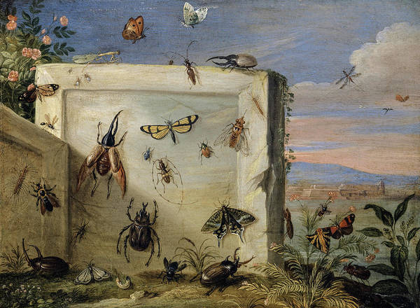 Wall Art - Painting - Insects On A Stone Slab by Jan van Kessel