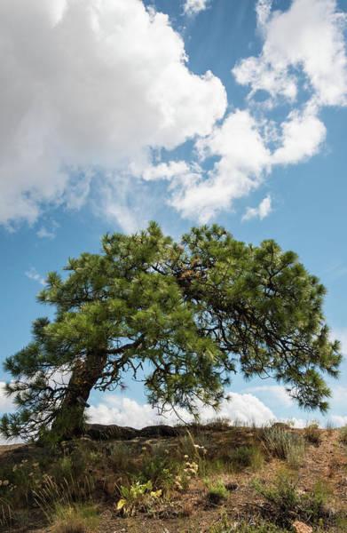 Photograph - Inspiration Tree by Kristopher Schoenleber