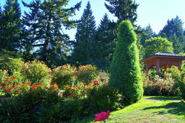 Wall Art - Photograph - International Rose Test Garden by Art Spectrum