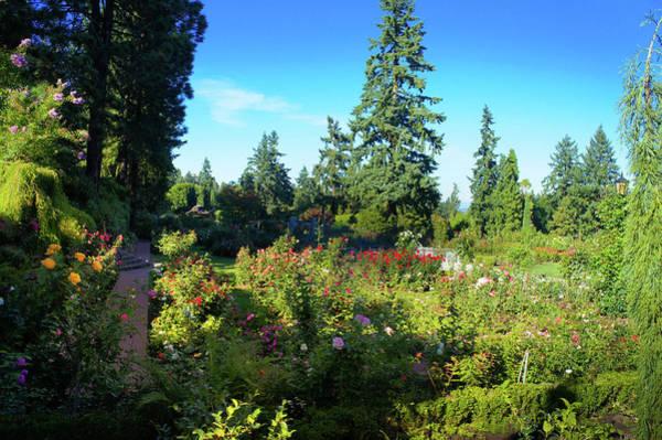 Wall Art - Photograph - International Rose Test Garden, Portland by Art Spectrum