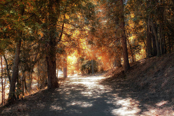 Photograph - Into The Autumn Woods by Alison Frank