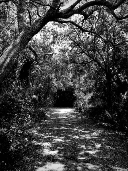 Photograph - Into The Darkness by Robert Stanhope