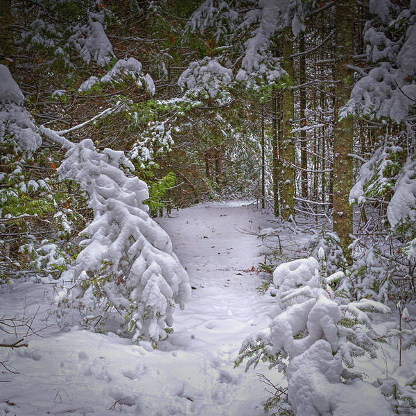 Photograph - Into The Snow by David Heilman