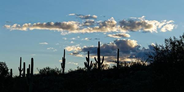Photograph - Into The Sunset - Saguaro by KJ Swan