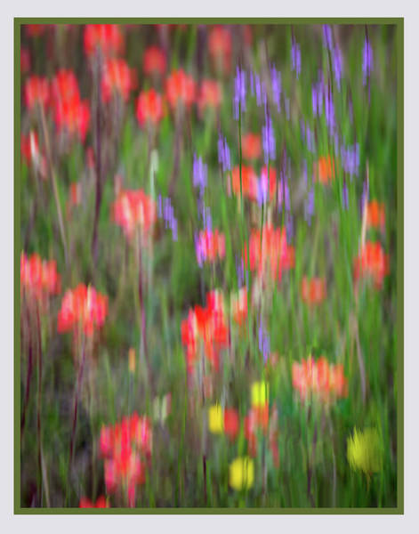 Photograph - Intoxicated With Spring by Harriet Feagin