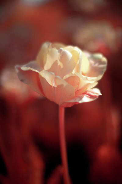 Photograph - Ir Flower by Brian Hale