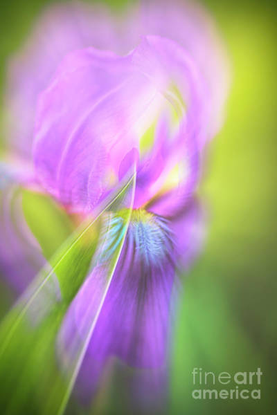 Wall Art - Photograph - Iris 2 by Veikko Suikkanen