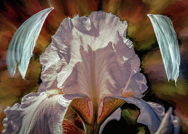Mixed Media - Iris And Angel #i8 by Leif Sohlman