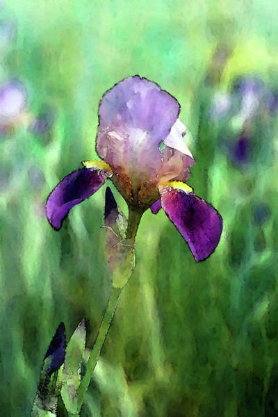 Photograph - Iris Foreground 6802 Idp_2 by Steven Ward