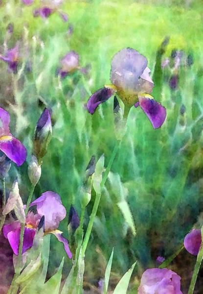 Photograph - Iris Garden 6801 Idp_2 by Steven Ward