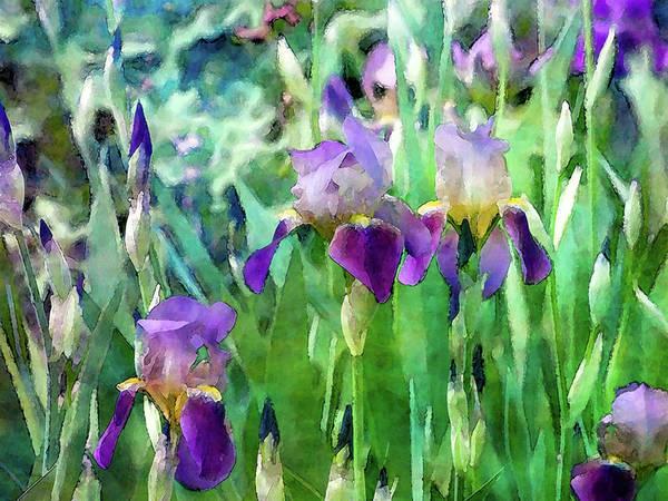 Photograph - Iris Garden 6817 Idp_2 by Steven Ward