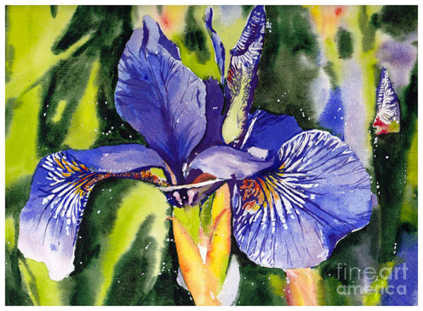 Wild Flower Painting - Iris In Bloom by Suzann Sines