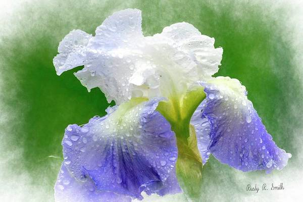 Digital Art - Iris In The Rain by Rusty R Smith
