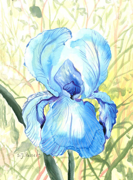 Painting - Iris Of The Mist by Sheri Jo Posselt