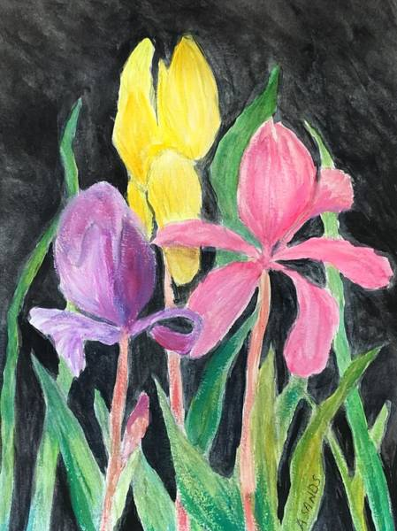 Wall Art - Painting - Iris On Black by Anne Sands