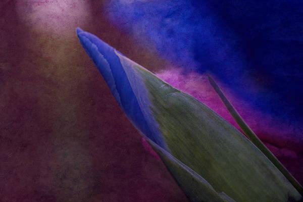 Iris To The Point Art Print