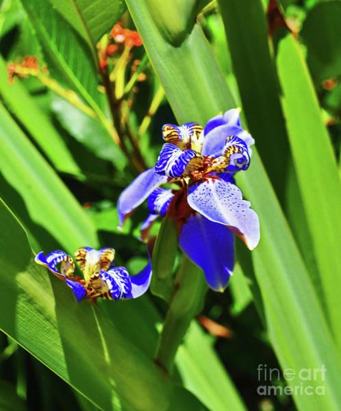 Photograph - Iris Up Close by George D Gordon III