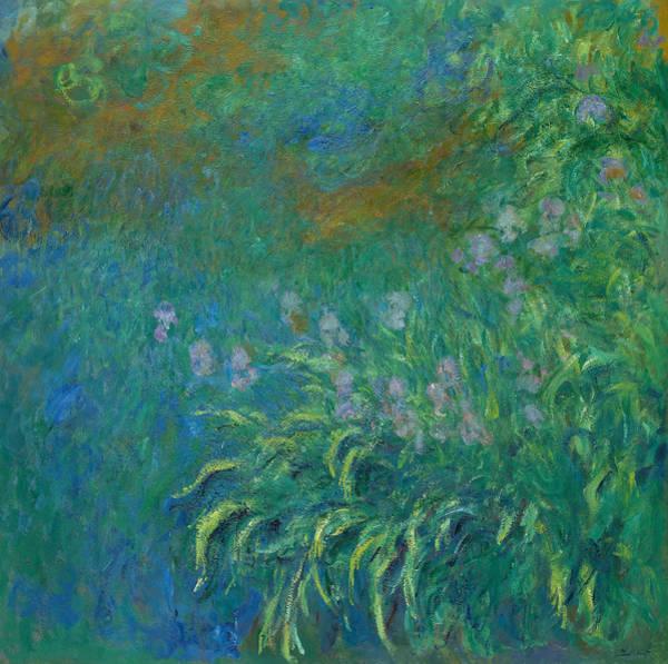 Wall Art - Painting - Irises, 1914-1926 by Claude Monet