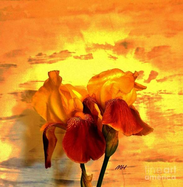 Wall Art - Photograph - Irises In The Sunshine by Marsha Heiken