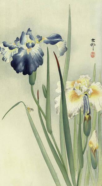 Wall Art - Painting - Irises by Ohara Koson
