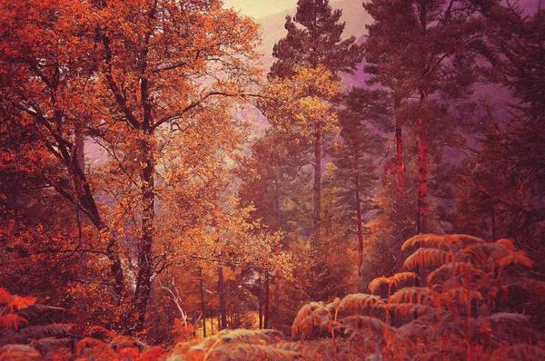 Photograph - Irish Journey. Fairy Woods Of Glendalough 1 by Jenny Rainbow
