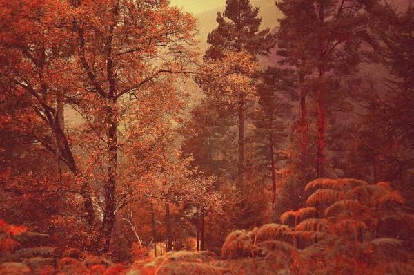 Photograph - Irish Journey. Fairy Woods Of Glendalough by Jenny Rainbow