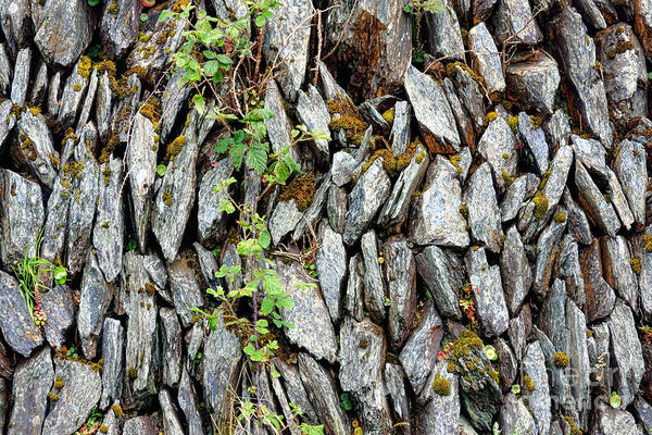 Wall Art - Photograph - Irish Stone Wall by Olivier Le Queinec