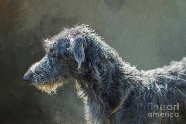 Mixed Media - Irish Wolfhound In Profile by Eva Lechner