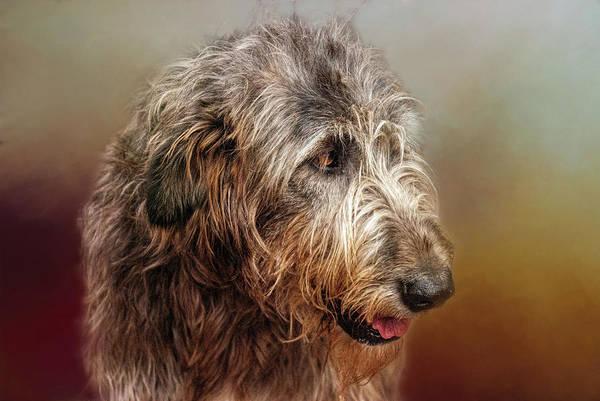 Wall Art - Photograph - Irish Wolfhound by Phyllis Taylor