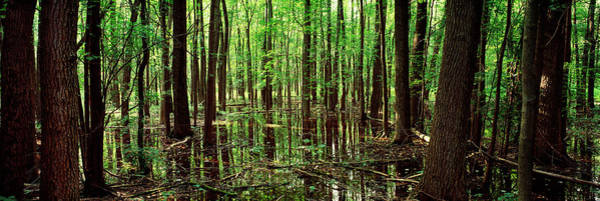 Wall Art - Photograph - Iroquois National Wildlife Refuge Ny by Panoramic Images