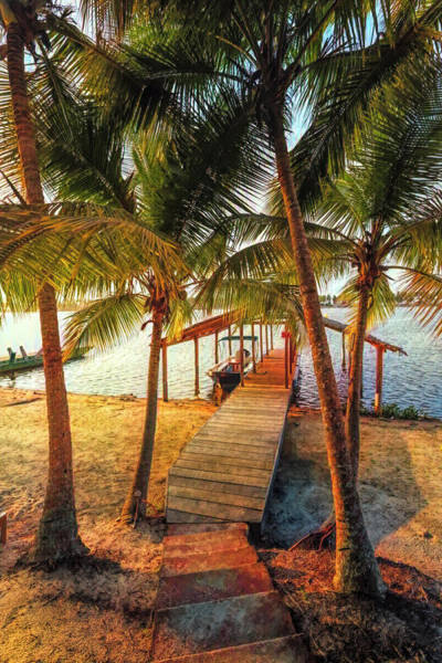 Photograph - Island Dock Under The Palms Early Light by Debra and Dave Vanderlaan