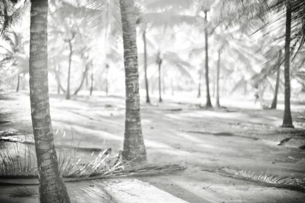 Photograph - Island Life by Trinidad Dreamscape