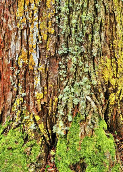 Photograph - Island Moss by JAMART Photography