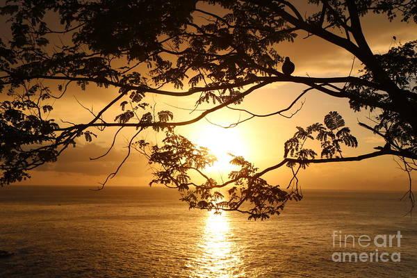 Photograph - Island Sunset by Christine Chin-Fook