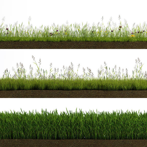 Isolated Grass Art Print by Ivanwupi